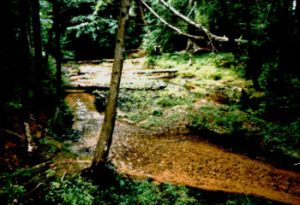 Creek in the woods, northern Michigan (lower peninsula)