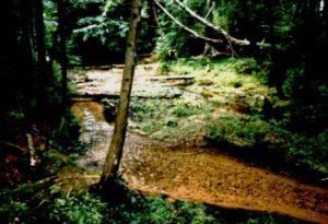 Creek in the woods, northern Michigan (lower peninsula)