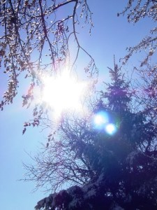 sun tree