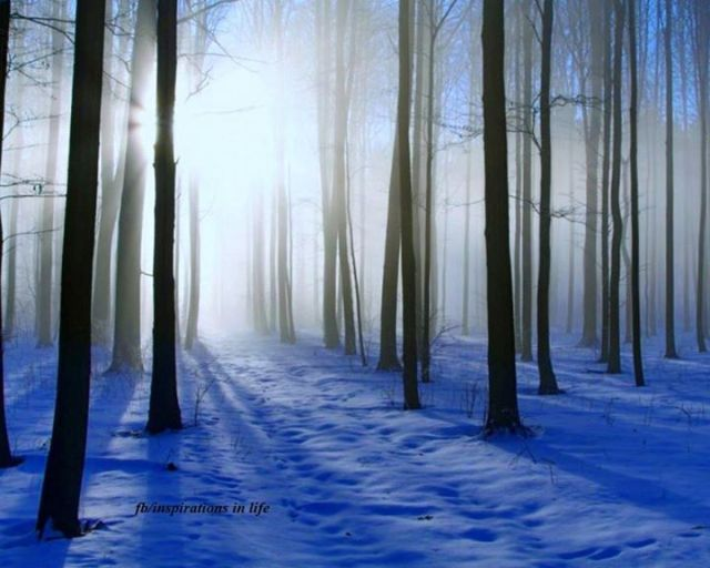 winterwoods-MimiLuik